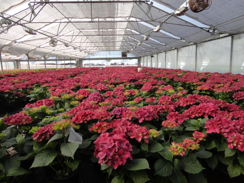Convocan a la conferencia sobre producci n de flores en for Que es un vivero frutal